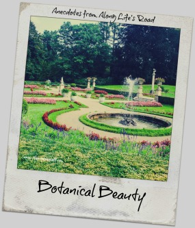 botanical beauty.jpg