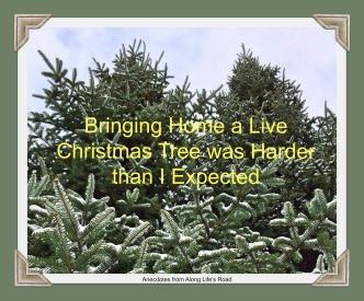 Live Tree Title.jpg