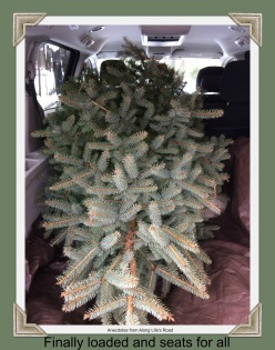 Tree in Vehicle.jpg
